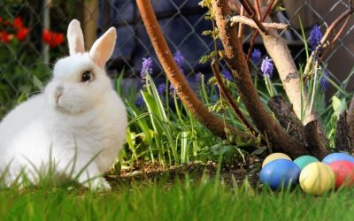 5 tips for keeping the easter bunny from hopping all over a good night's sleep